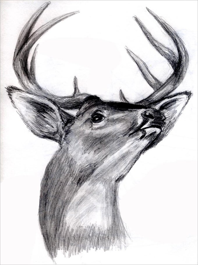 stunning deer pencil drawing