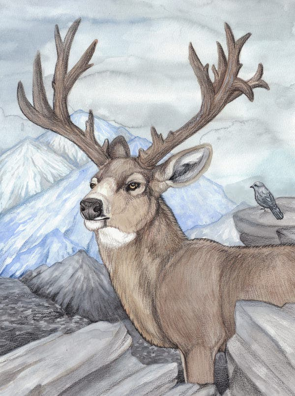 ultimate deer drawing