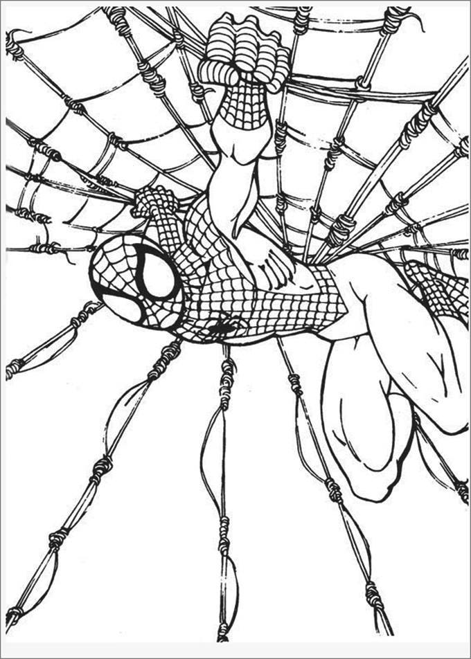 web spiderman