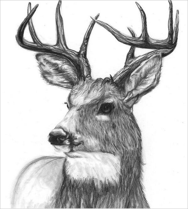 woods deer drawing