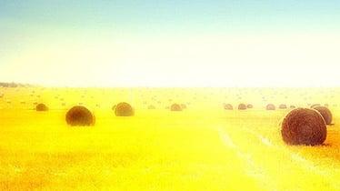 agriculture drupal theme
