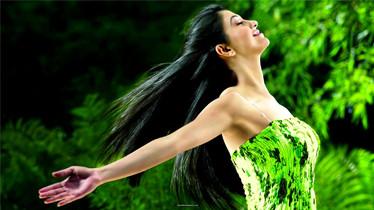 feature image green wordpress theme