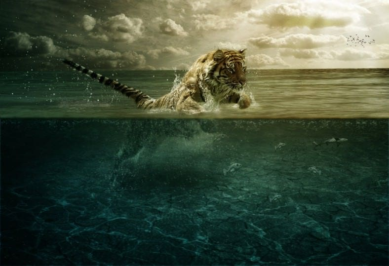tiger leap in the water 788x539