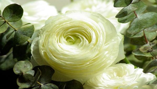 flowerpetaltemplate1