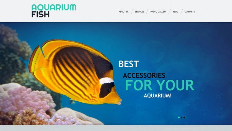 Colorful WordPress Theme for Aquarium Fish