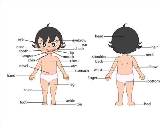 free human body facts for ks1 template
