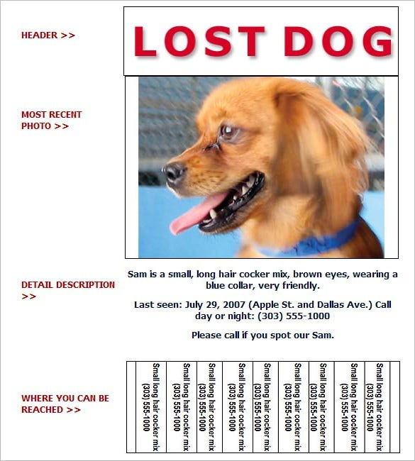 lost dog flyer sample