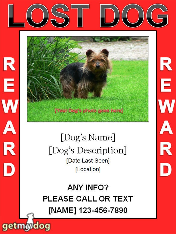 Lost Dog Flyer Template This Hilarious Paper Street Signs – Lost Dog Flyer Template Word