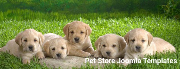 Pet Store Joomla Templates