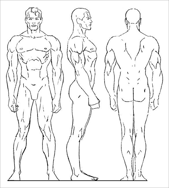 sample male human body drawing template