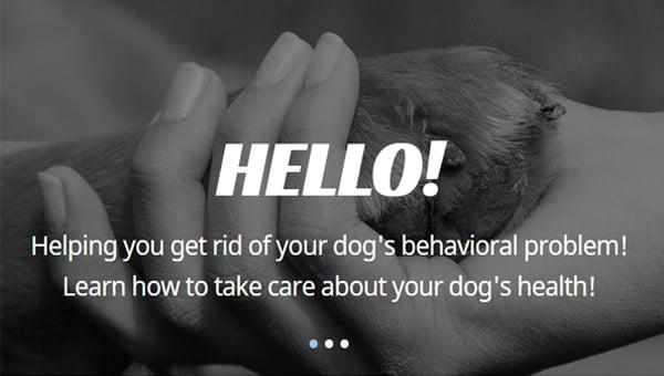 animal shelter joomla templates