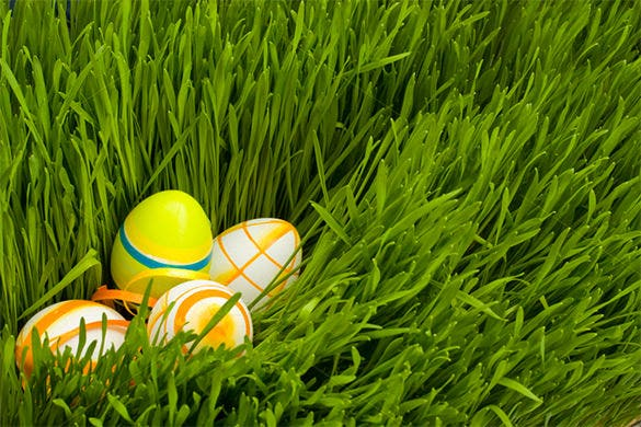 green grass and easter eggs template for 5