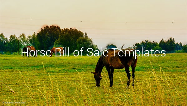 horse bill of sale templates