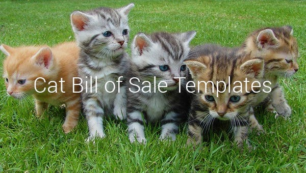 cat bill of sale