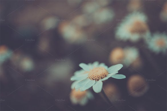 abstract premium daisy spring background