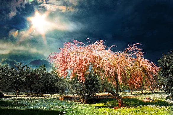 26 Spring Backgrounds Psd Jpeg Png Free Premium Templates