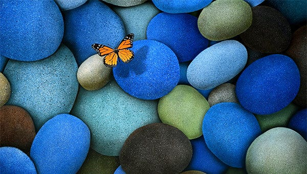 butterfly backgrounds
