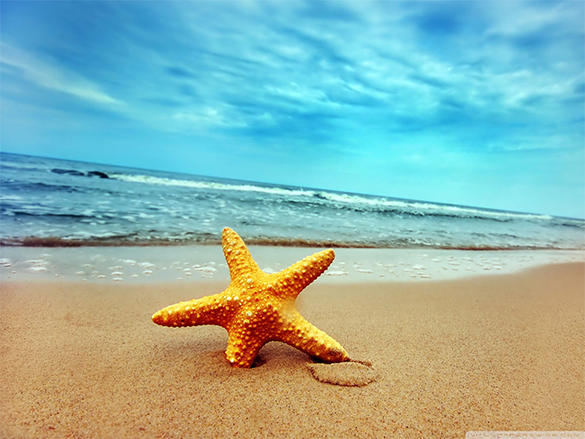 dynamic free beach background for you