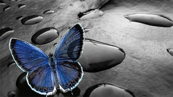 excellent free butterfly background download