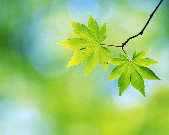 excellent free green spring background download