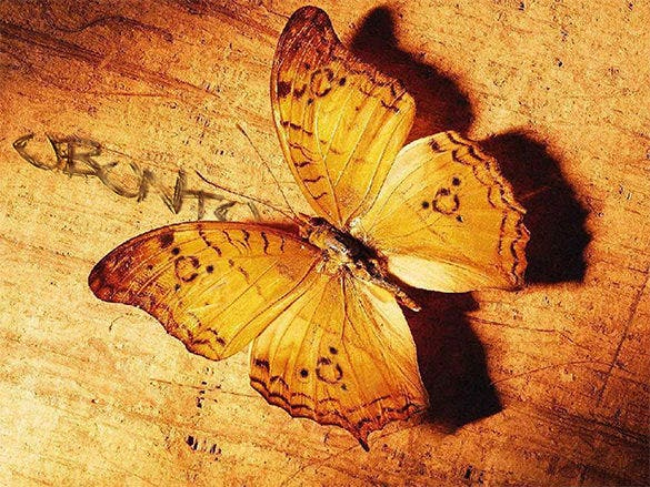 extraordinary butterfly background for you