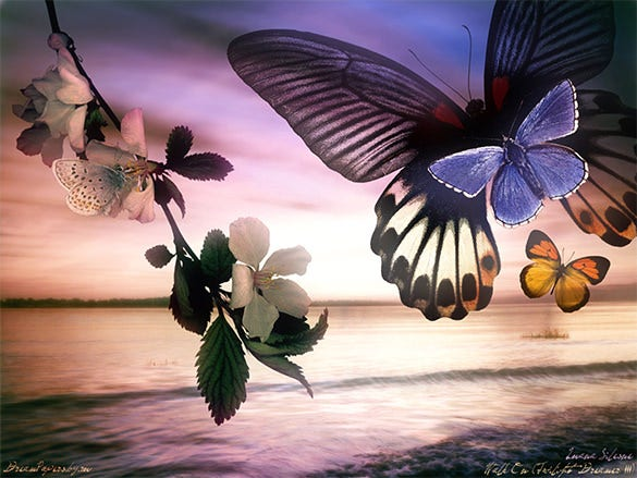 fabulous butterfly background for you