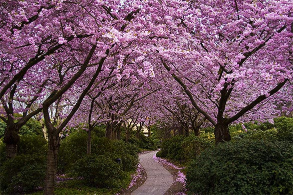 fabulous free spring background for you