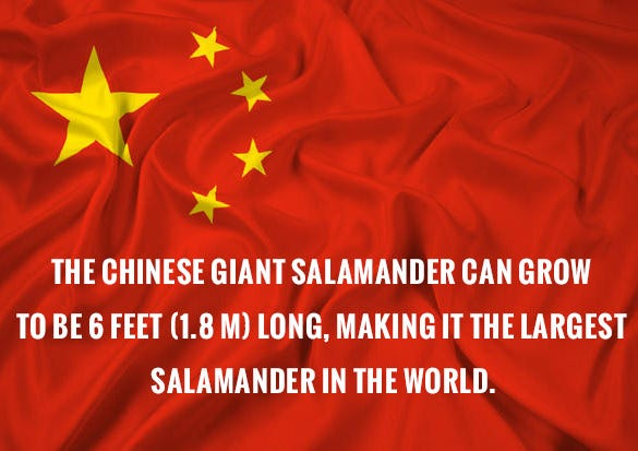 fact about chinese giant