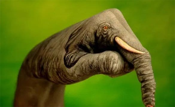 fantastic elephant 3d body painting