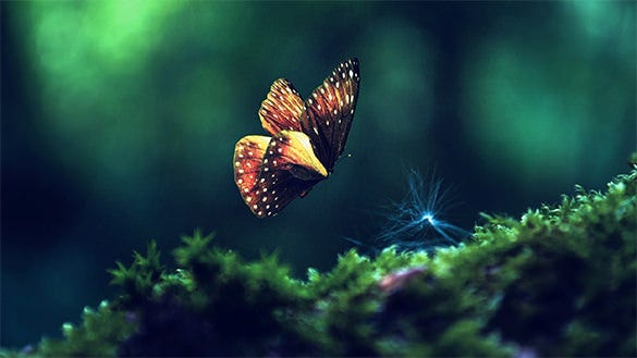 free butterfly background download