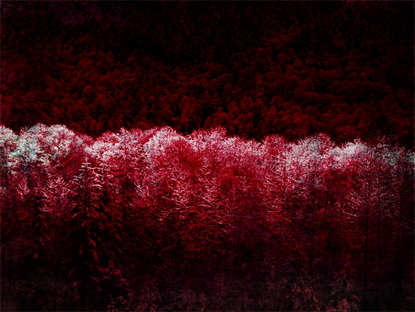 free red coloured dark forest background