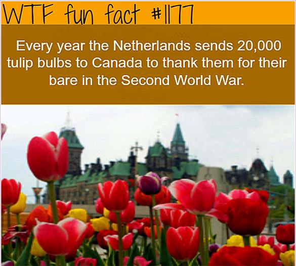 netherland fact