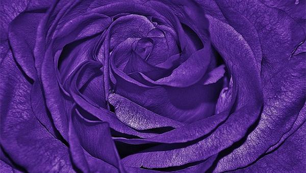 purplebackgrounds