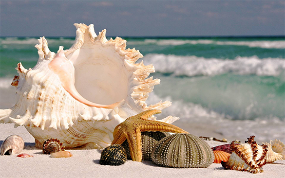 sea shells with beach background for free