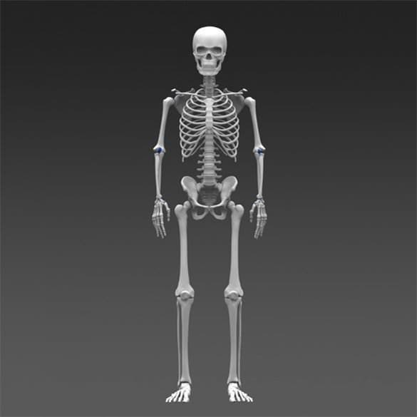 simple human skeleton template free example