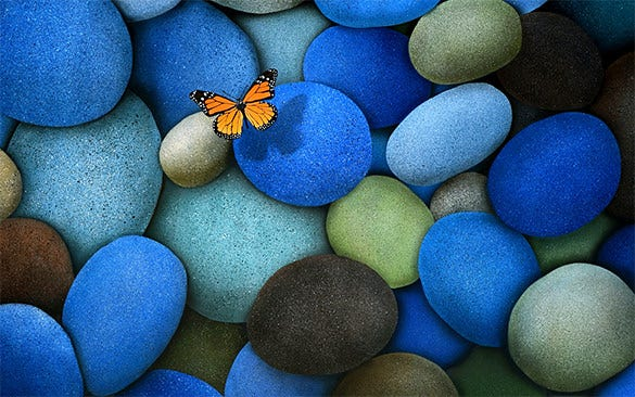 ultimate free butterfly background for you