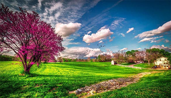 wonderful free spring background for you
