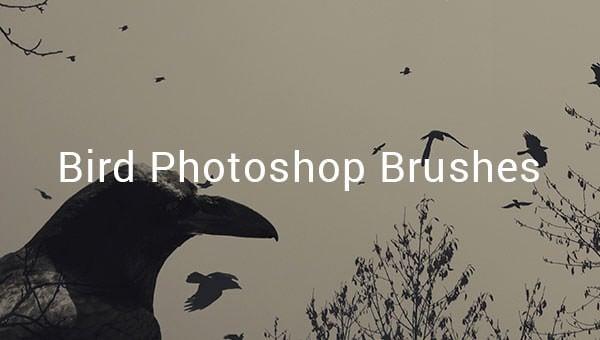 birdphotoshopbrushes