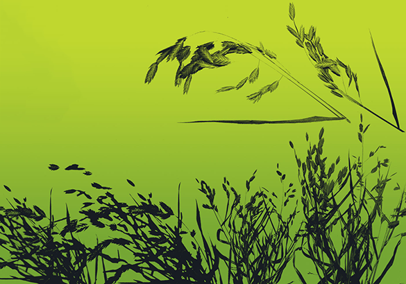 6 fantastic photoshop grass brushes for free