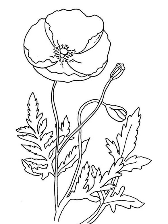 poppy flower coloring page.html