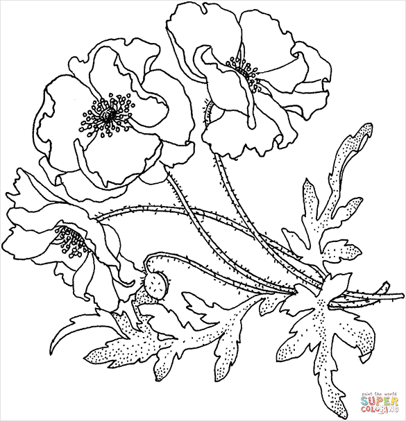 elegant free poppy colouring page for you