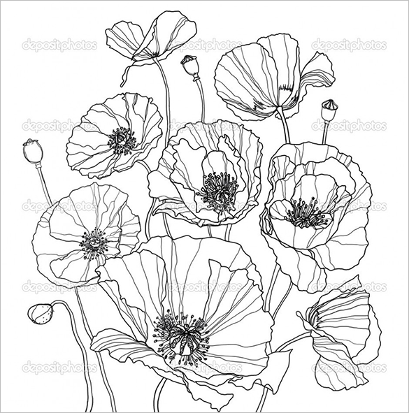 Line Drawing Spring Flowers : Poppy coloring pages pdf jpg free premium templates