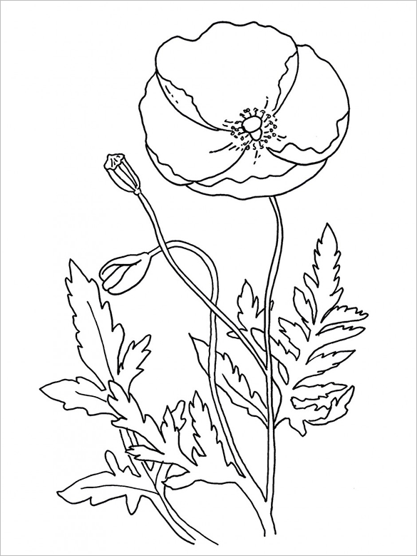 extraordinary poppy colouring page free printable