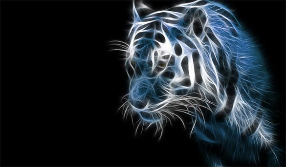 hd tiger background for desktop