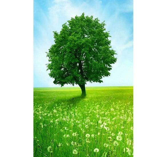 green tree cool iphone 5 wallpaper