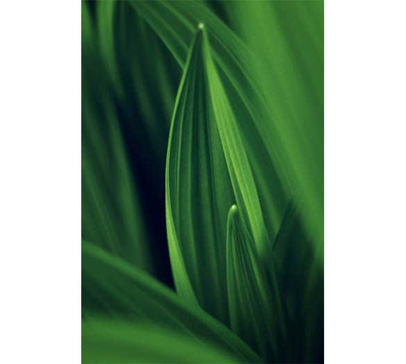 leaf wallpaper iphone background