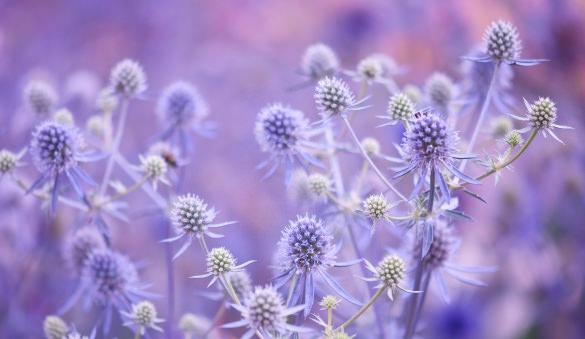 flowers plants lilac best desktop backgrounds