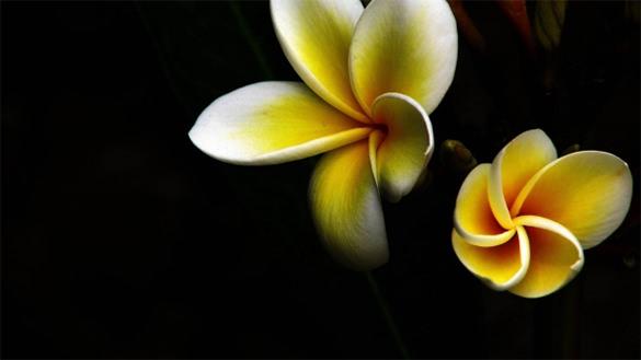 dark flowers wallpapers for girl desktop