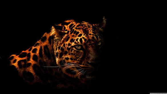 download leopard dark wallpaper free
