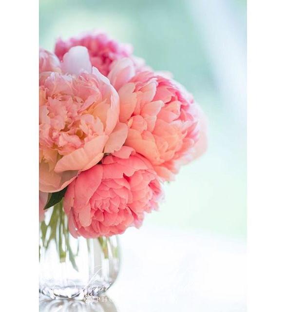 flower change instagram backgrounds